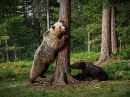 медвежонок, лес, поза, пара, медведи, дерево