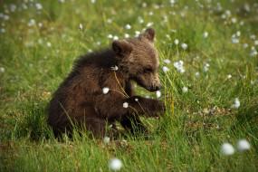 малыш, медвежонок, поза, морда, трава, лето