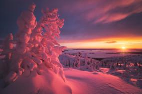зима, пейзаж, снег, деревья, ели, ёлки, солнце, лучи, закат, вечер