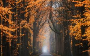 осень, лес, дорога