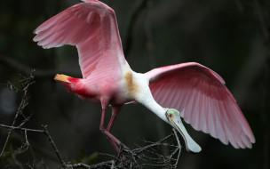 крылья, розовая, птица, природа, клюв, перья, ветки