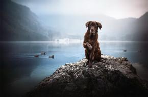 Грустный, коричневый, пес