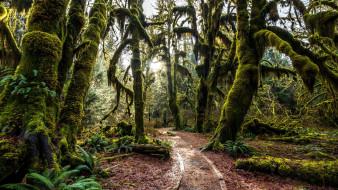 природа, лес, стволы, деревья
