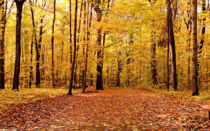 природа, лес, деревья, осень, дорожка, листья