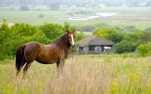 дом, лошадь, трава, луг