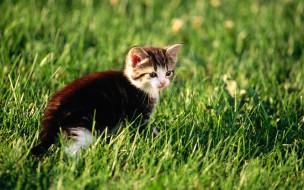 трава, котенок, лужайка