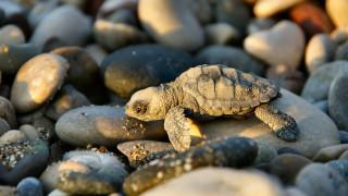 животные, черепахи, галька, камни, черепашонок