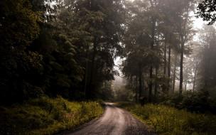 дорога, лесная
