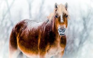 животные, лошади, снег, бурая, лошадь