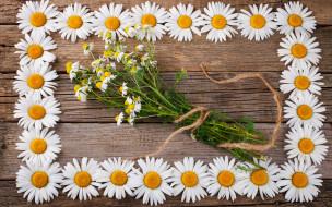ромашки, фон, цветы