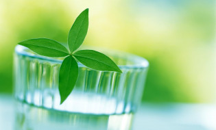 листья, стакан, вода, растение