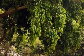 зеленая, листва