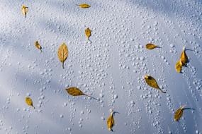 листья, вода, капли