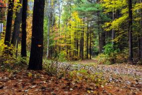 лес, осень, листопад