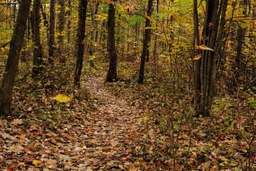 листопад, осень, лес