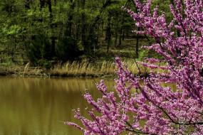 весна, цветение, река