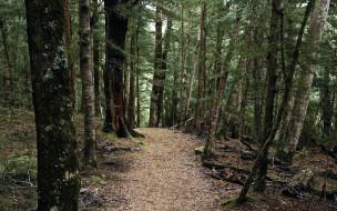 природа, лес, деревья, тропинка
