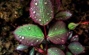 листья, капли