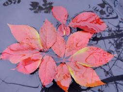 листья, вода