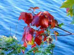 вода, листья