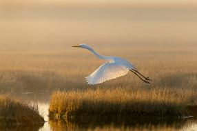 свет, озеро, птица, болото, белая цапля