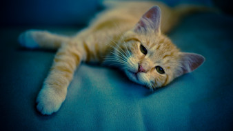 кошки, животные