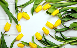 желтые, тюльпаны, бутоны