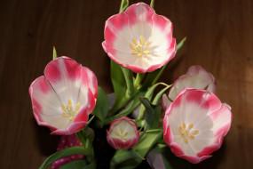 тюльпаны, двухцветные