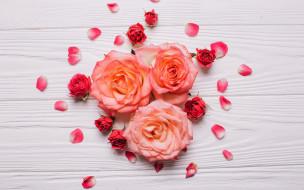 розы, лепестки, бутоны