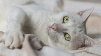 кошки, животные, коты