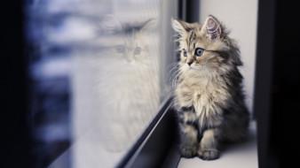 коты, кошки, животные