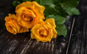 капли, розы, желтые