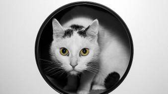 животные, кошки, коты