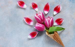 тюльпаны, лепестки