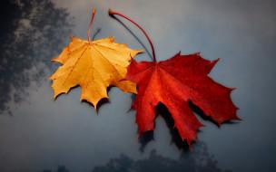 фон, листья