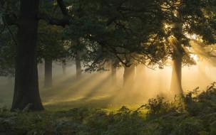 природа, лес, туман, утро