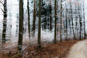 природа, лес, деревья, снег
