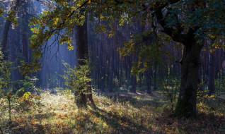 природа, лес, осень