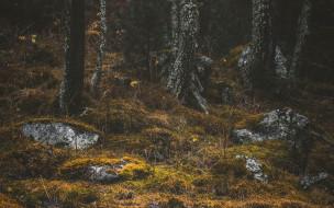 природа, лес, стволы