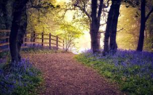 природа, лес, весна, тропинка