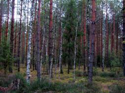 обои для рабочего стола 1920x1440 природа, лес, сосны, березки