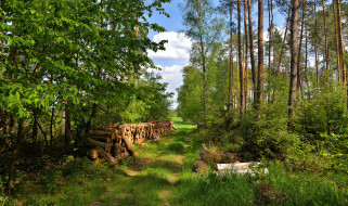 обои для рабочего стола 2048x1214 природа, лес, бревна, тропинка