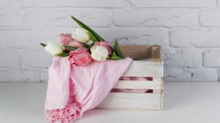 бутоны, тюльпаны
