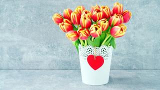 бутоны, ваза, тюльпаны