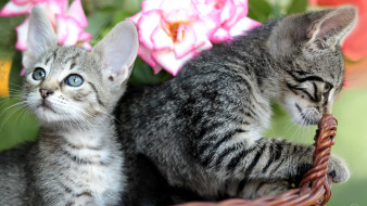 Кошки обои для рабочего стола 1920x1080 кошки, животные, коты