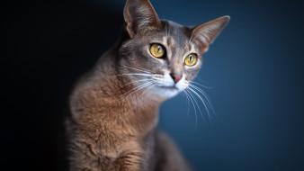 животные, коты, кошки