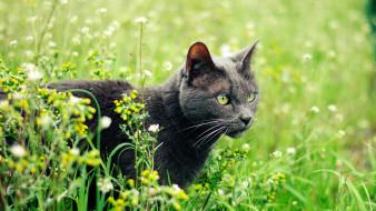 коты, животные, кошки