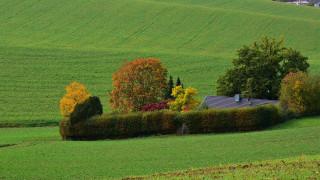 поля, дом, деревья