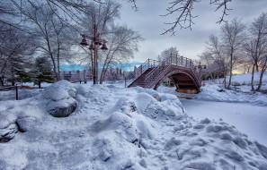 зима, снег, дерево