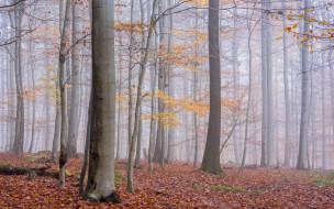 обои для рабочего стола 2880x1800 природа, лес, туман
